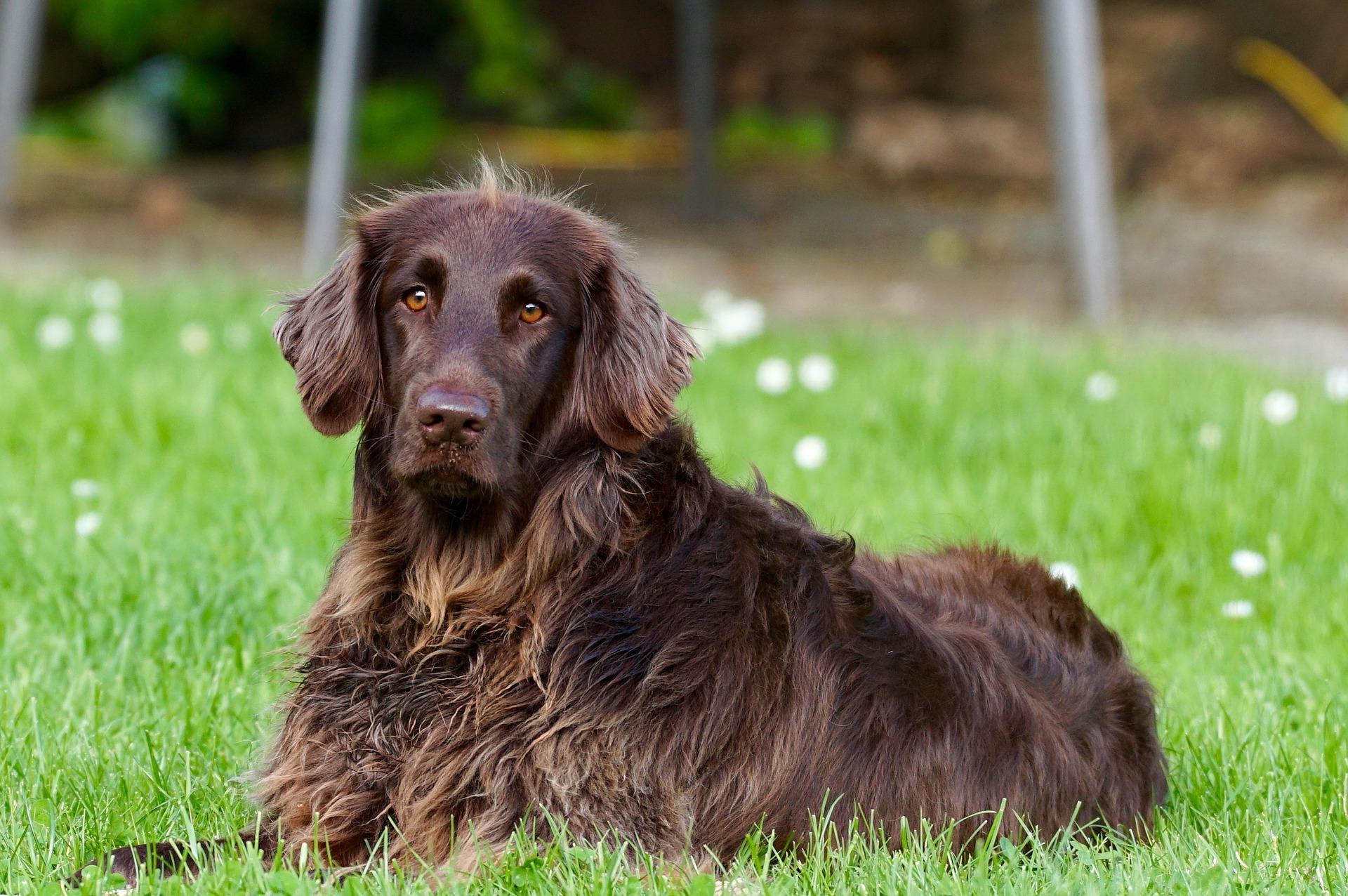 seguro de mascotas , seguros para perros