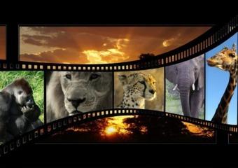 10-seguros-de-cinematografia